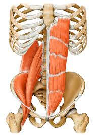 Core Muscles, Pilates Exercise